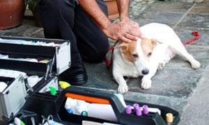 pet-mobile-vet-services