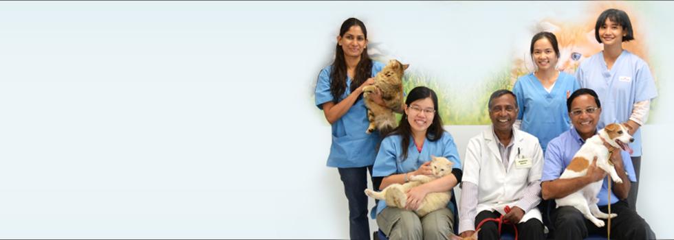 Experienced Veterinarians